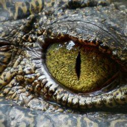 cocodrilo-africa-1