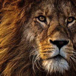 leon-miniatura-africa