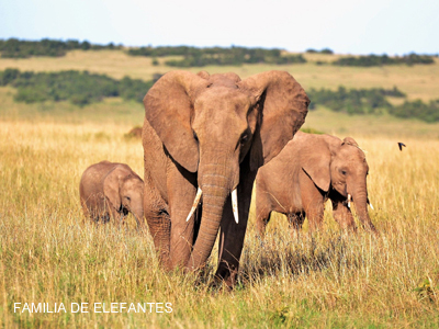 imagen-elefantes