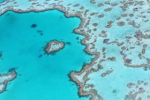 miniatura-imagen-gran-barrera-de-coral