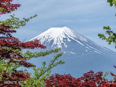 monte-fuji