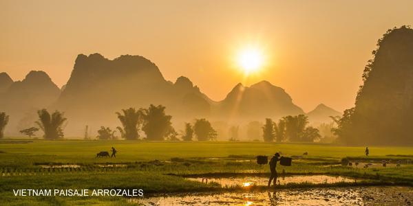 vietnam-paisajes-arrozales